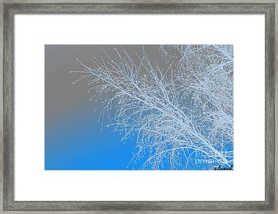 Blue Branches Framed Print by Carol Lynch