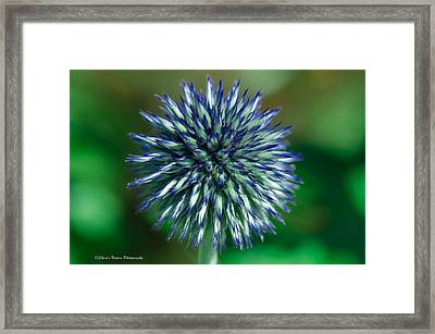 Blue Burst Framed Print by Sheen Watkins