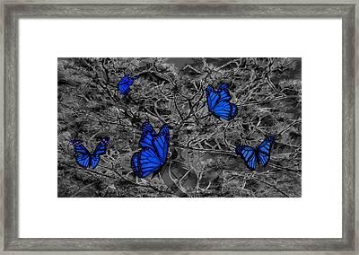 Blue Butterflies 2 Framed Print by Barbara St Jean