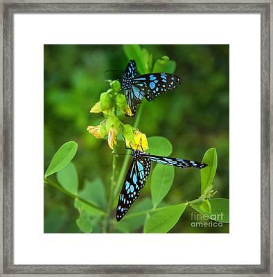 Blue Butterflies In The Green Garden Framed Print by Regina Koch