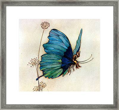 Blue Butterfly II Framed Print by Warwick Goble