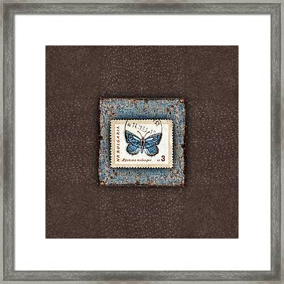 Blue Butterfly On Copper Framed Print by Carol Leigh