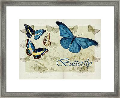 Blue Butterfly - S01a Framed Print by Variance Collections