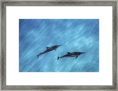 Blue Chill Framed Print by Sean Davey