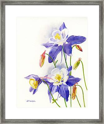 Blue Columbine Blossoms Framed Print by Sharon Freeman