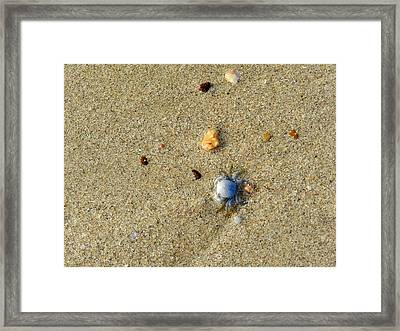 Blue Crab Framed Print by Leana De Villiers