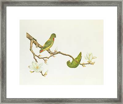 Blue Crowned Parakeet Hannging On A Magnolia Branch Framed Print by Chinese School