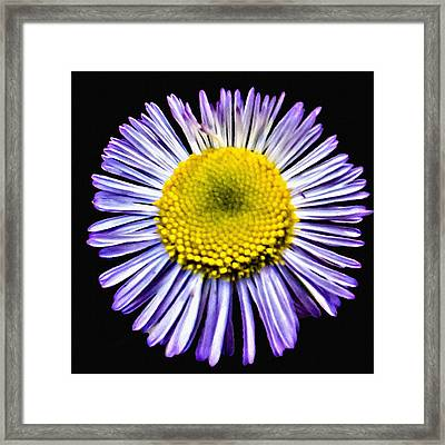 Blue Daisy Painting Framed Print by Bob and Nadine Johnston
