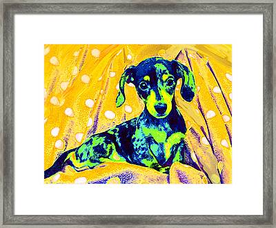Blue Doxie Framed Print by Jane Schnetlage