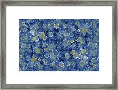 Blue Drip Framed Print by Frank Tschakert