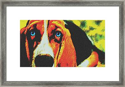 Blue Eye Beagle Framed Print by Jessie J De La Portillo