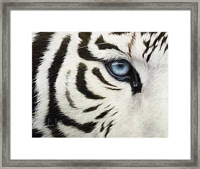 Blue Eye Framed Print by Lucie Bilodeau