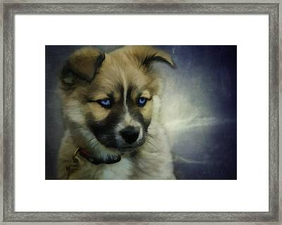 Blue Eyes Framed Print by Jacque The Muse Photography