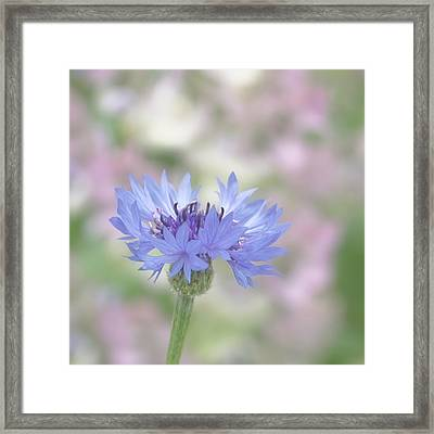 Blue Fantasy Framed Print by Kim Hojnacki