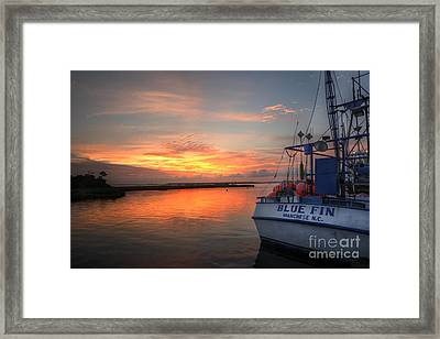 Blue Fin Morning Framed Print by Terry Rowe