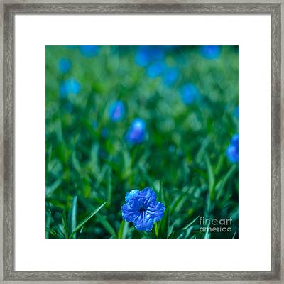 Blue Flower Framed Print by Julian Cook