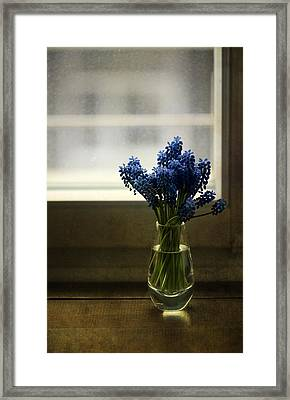 Blue Grape Hyacinth Flowers In The Glass Flowerpot Framed Print by Jaroslaw Blaminsky