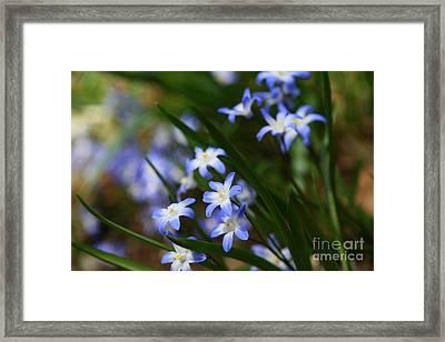 Blue For You Framed Print by Neal  Eslinger