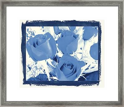 Blue For You Roses Framed Print by Belinda Lee