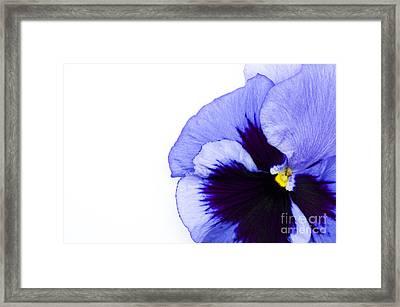 Blue Frost Framed Print by Anne Gilbert