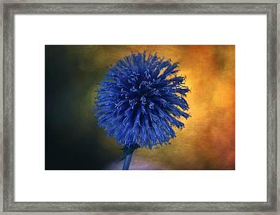 Blue Globe Thistle  Framed Print by Maria Angelica Maira