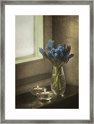 Blue Grape Hyacinth Flowers And Lit Candles At The Window Framed Print by Jaroslaw Blaminsky