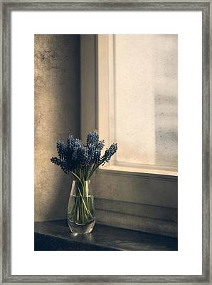 Blue Grape Hyacinth Flowers At The Window Framed Print by Jaroslaw Blaminsky