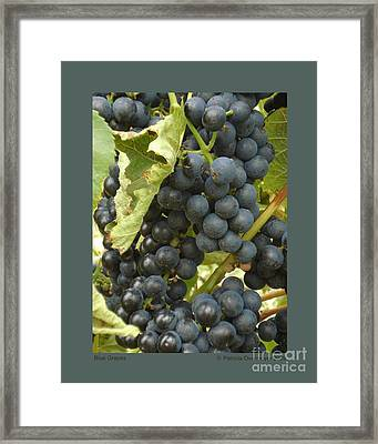 Blue Grapes Framed Print by Patricia Overmoyer