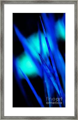 Blue Grass Framed Print by Catherine Fenner