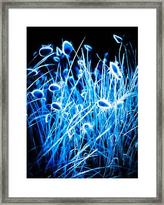 Blue Grass Framed Print by motography aka Phil Clark
