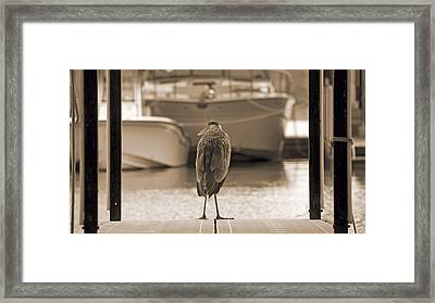Blue Heron Sepia Framed Print by Steven  Michael