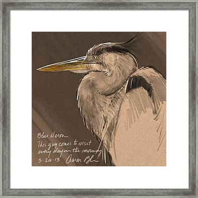 Blue Heron Sketch Framed Print by Aaron Blaise