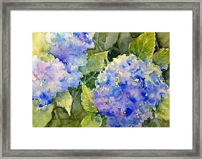 Blue Hydrangea Framed Print by Cynthia Roudebush