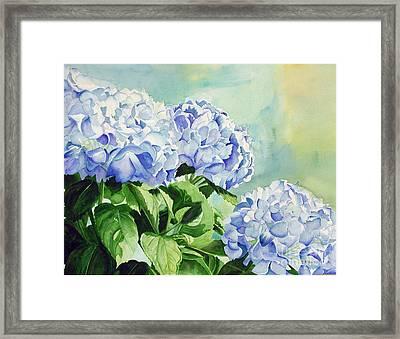 Blue Hydrangeas Framed Print by Elizabeth  McRorie