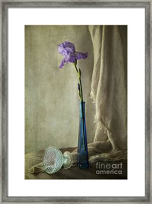 Blue Iris Framed Print by Elena Nosyreva