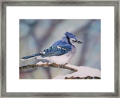 Blue Jay Framed Print by Lillian  Bell
