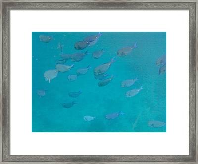 Blue Life Framed Print by Michael Glenn