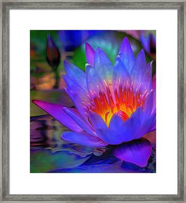 Blue Lotus Framed Print by  Fli Art
