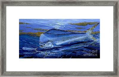 Blue Mahi Off0071 Framed Print by Carey Chen