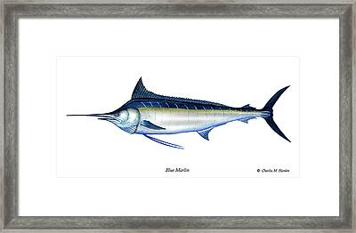 Blue Marlin Framed Print by Charles Harden