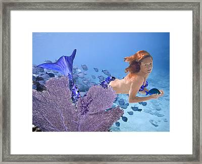Blue Mermaid Framed Print by Paula Porterfield-Izzo
