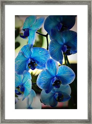 Blue Monday Framed Print by Mandy Shupp