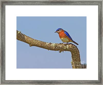 Blue On Blue Framed Print by Gary Holmes