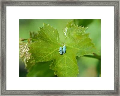 Blue On Green Framed Print by Fraida Gutovich