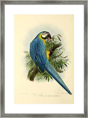 Blue Parrot Framed Print by J G Keulemans