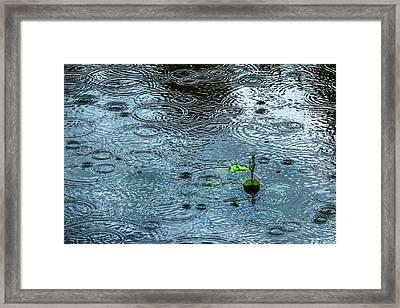 Blue Rain - Featured 3 Framed Print by Alexander Senin