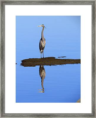 Blue Reflections Framed Print by Phyllis Beiser