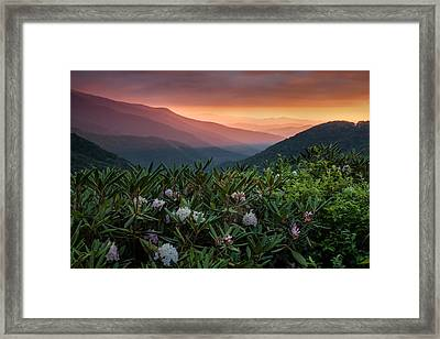 Blue Ridge Morn With Rose Bay Rhododendron  Framed Print by Rob Travis