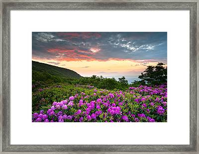 Blue Ridge Parkway Sunset - Craggy Gardens Rhododendron Bloom Framed Print by Dave Allen