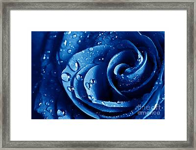 Blue Roses Framed Print by Boon Mee